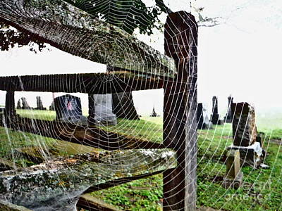 Web Of Life Photograph - Web Of Life  by Paddy Shaffer