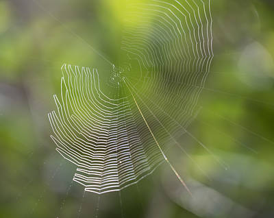 Photograph - Web Of Sunlight by Loree Johnson