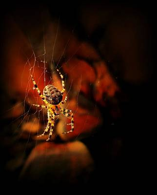 Photograph - Web Of The Yellow Spider by Sarah Pemberton