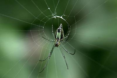 Photograph - Web Site  - Orchard Spider by Ramabhadran Thirupattur