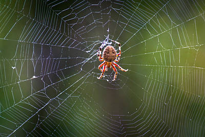 Photograph - Web Warlord by Bill Pevlor