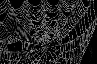 Photograph - Web We Weave by Jack R Perry
