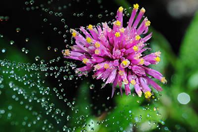 Webbed Water Droplets Art Print by Kelly Nowak