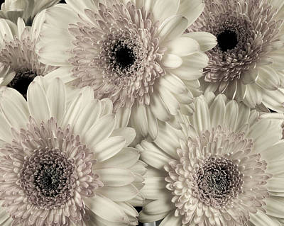 Wedding Bouquet -gerbera Duotone Art Print