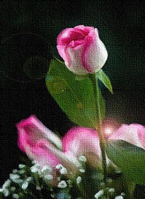 Digital Art - Wedding Rose by Dennis Buckman