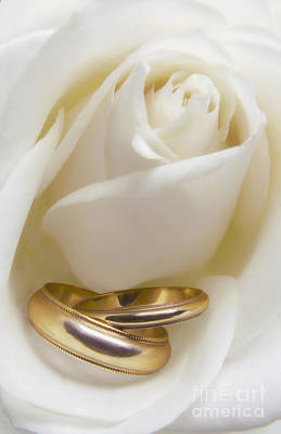 Anniversary Ring Photograph - Wedding Rose by Diane Diederich
