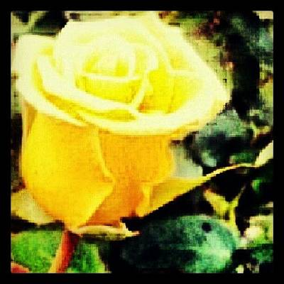 Stroke Wall Art - Photograph - #wednesdays #theletterislove A #rose By by Ragenangel -s