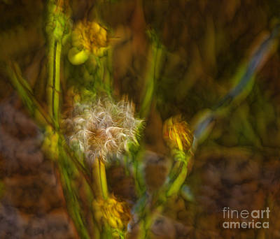 Art Print featuring the photograph Weed Art by Shirley Mangini