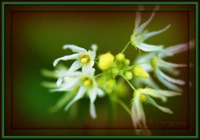 Flowers Photograph - Weed by Michaela Preston