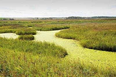 Weed On The Cley Bird Reserve Art Print