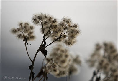 Photograph - Weed Seed Pods by Robert Culver