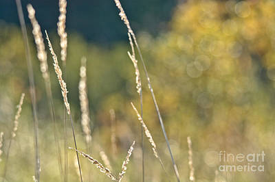 Photograph - Weeds And Bokeh by Cheryl Baxter