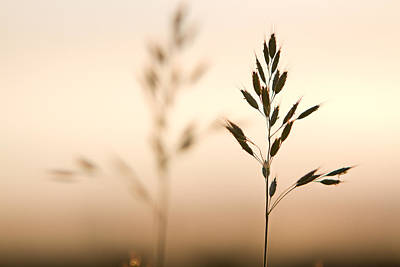Photograph - Weeds In Evening Light by Teresa Hunt
