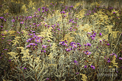 Goldenrod Photograph - Weeds In Late Summer by Elena Elisseeva