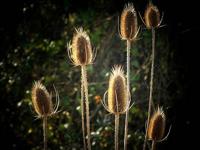 Weeds Art Print by Michael L Kimble