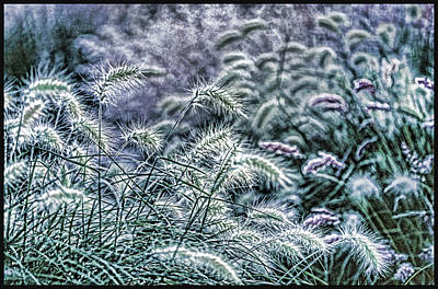 Robert Walker Photograph - Weeds2 by Robert Walker