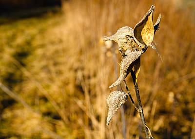 Wetmore Photograph - Weeds Vii by Tim Fitzwater