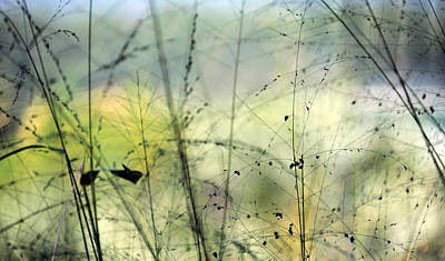 Photograph - Weeds With Color by Mark Sullivan