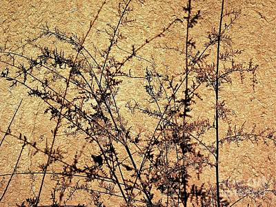 Photograph - Weeds With Shadows by Ethna Gillespie