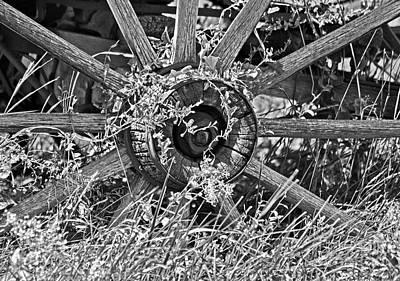 Photograph - Weedy Wheel  by Juls Adams
