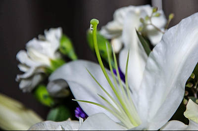 Photograph - Weeping Lily by Susan  McMenamin