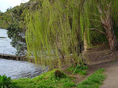 Weeping Willow Photograph - Weeping Willow by Brian  Hanna