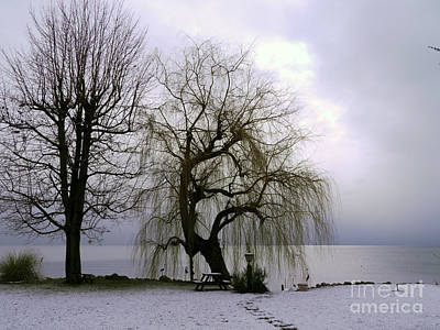 Weeping Willow By Lake Geneva Art Print by Adam Sylvester