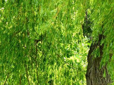 Weeping Willow Green Art Print by Will Borden