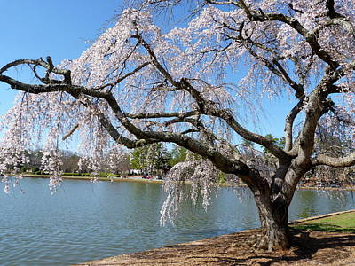 Furman Photograph - Weeping Willow In Bloom by Gordon Taylor