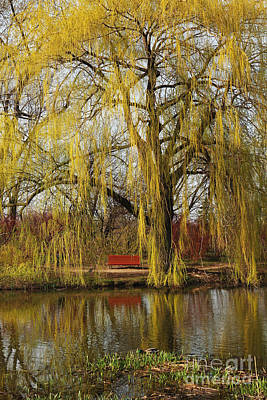 Weeping Willow  Art Print by Isabel Poulin