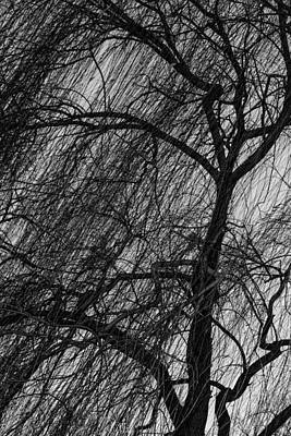 Photograph - Weeping Willow by Robert Hebert