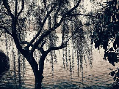 Photograph - Weeping Willow by Robert Knight