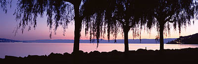 Weeping Willows, Lake Geneva, St Art Print by Panoramic Images