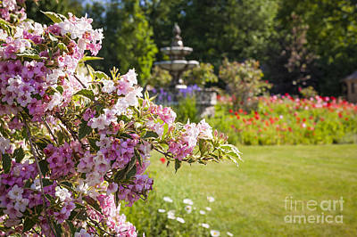 Flower Design Photograph - Weigela In June Garden by Elena Elisseeva