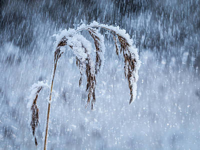 Photograph - Weight Of Winter by Janne Mankinen