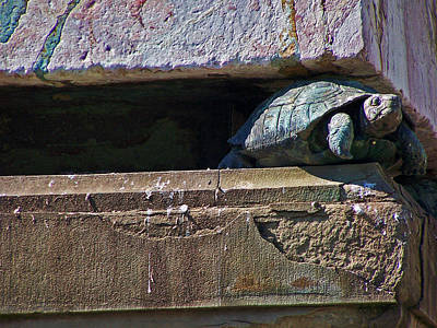 Turtle Photograph - Weighted Down by Jennifer Robin