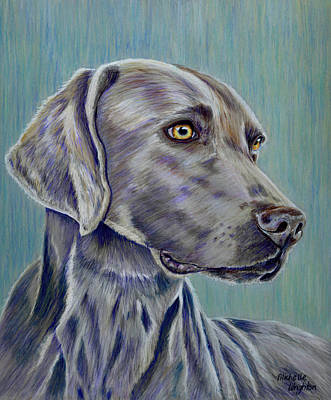 Vet Drawing - Weimaraner Grey Ghost by Michelle Wrighton