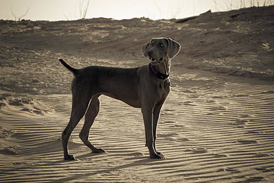 Photograph - Weimaraner I - Lake Powell by Julie Niemela