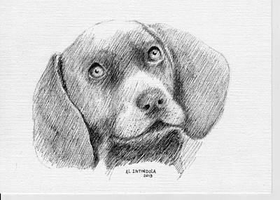 Weimaraner Puppy Art Print