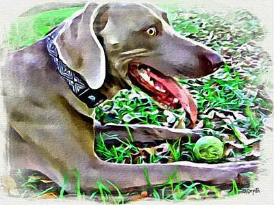 Photograph - Weimaraner With Tennis Ball by Rebecca Korpita