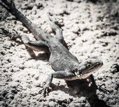 Photograph - Weird Lizard by Stwayne Keubrick