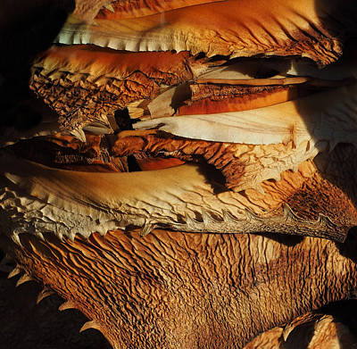 Photograph - Weird Plant Bark by Derek Dean