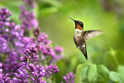 Photograph - Welcome Home Hummingbird by Christina Rollo