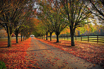 Photograph - Welcome Home Bradford Pear Lined Drive-way by Reid Callaway