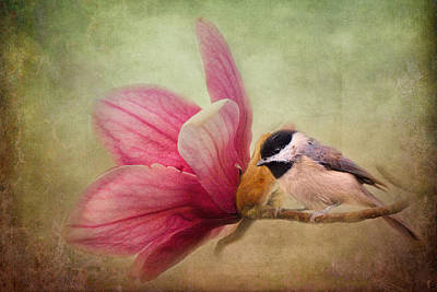 Chickadee Photograph - Welcome Spring by Jai Johnson