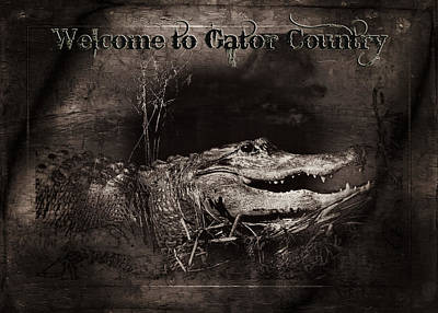 Reptiles Royalty-Free and Rights-Managed Images - Welcome to Gator Country by Mark Andrew Thomas