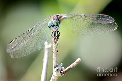 Dragonfly Eyes Photograph - Welcome To My World by Carol Groenen