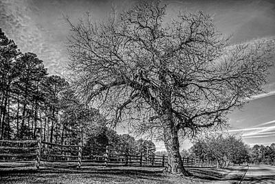 Photograph - Welcome To Williamsburg Tree by Jerry Gammon