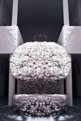 White Photograph - Welcome Tree Infrared by Adam Romanowicz