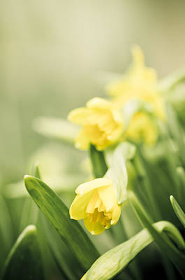 Yellow And Green Floral Photograph - Welcoming Spring by Carolyn Cochrane